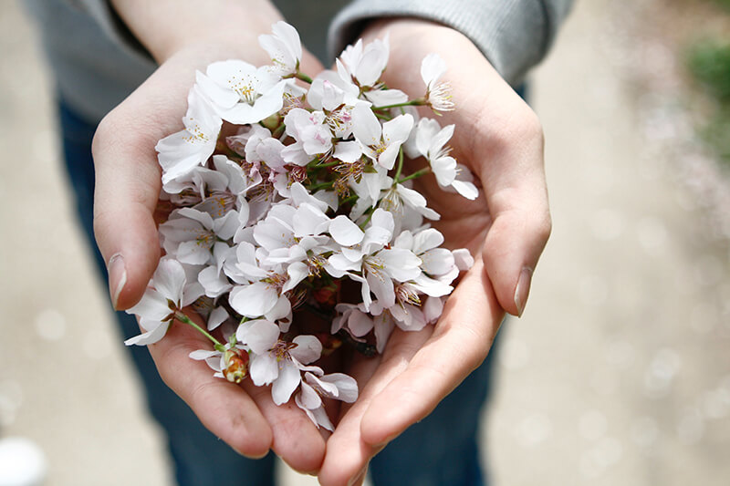 Flower Gifts Sand Springs OK Funeral Home And Cremations